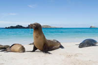 Galapagos Islands Cruise Tips