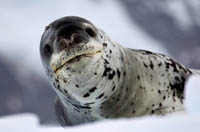11 Animals to Spot During an Antarctica Cruise