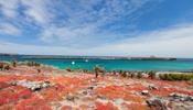 Silver Galapagos (Image)