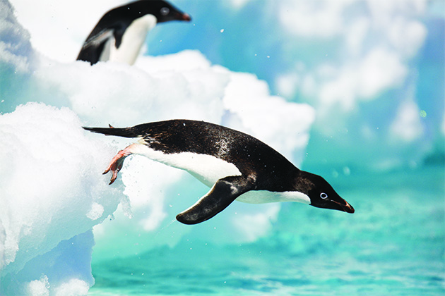 Antarctica Cruise Tips