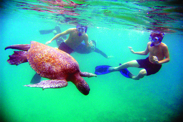 Cruise passengers swimming with a sea turtle