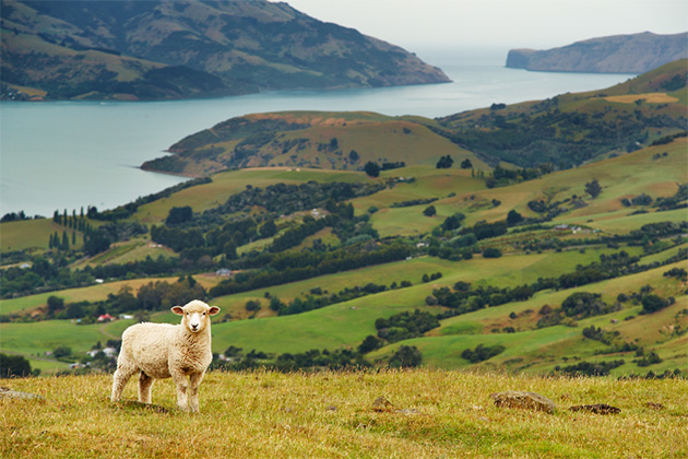 New Zealand Cruise Tips