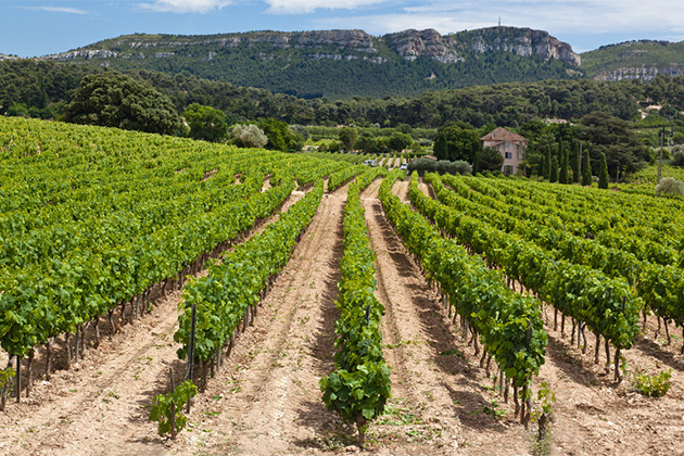 Vineyards near Cassis