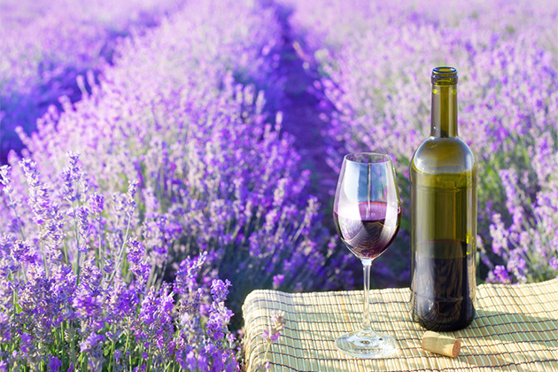 Taking A Provence Wine Tour From Cruise Ports In The South