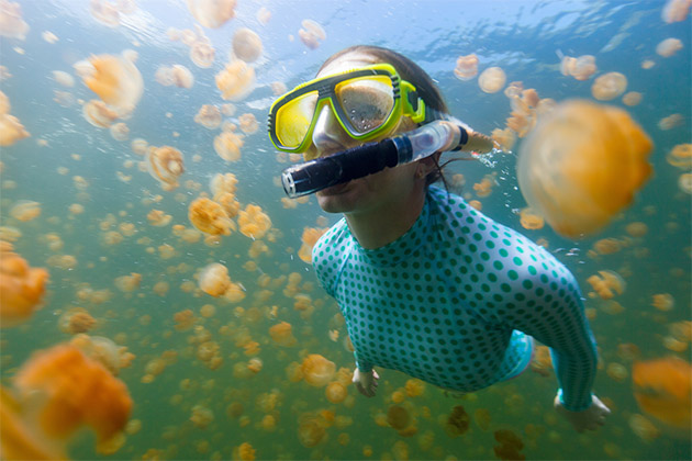 Underwater photo of tourist woman snorkelling with endemic golden jellyfish in lake at Palau