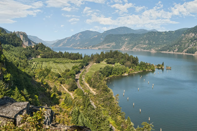 Aerial of scenic vineyards & orchards in Columbia River Gorge