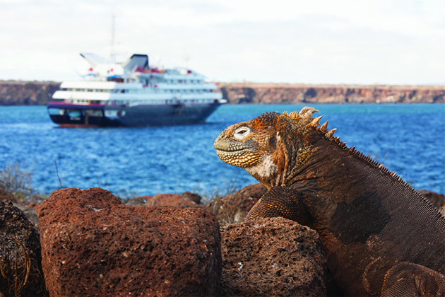 Iguana perched on a rock in the Galapagos with expedition luxury cruise vessel in the background