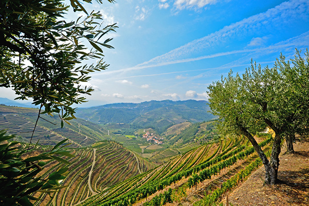 Douro Valley: Vineyards and olive trees near Pinhao, Portugal