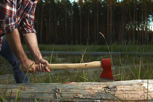 Hands of Lumberjack with Axe cut a Tree