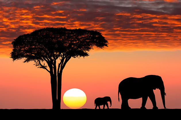unset in the Serengeti Park. Tanzania. Africa.