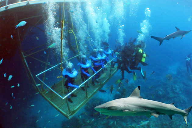 4 underwater alternatives to snorkeling and diving cruise critic