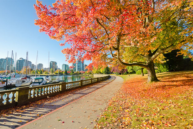 Orange autumn trees and sea walk at Stanley Park in Vancouver, Canada