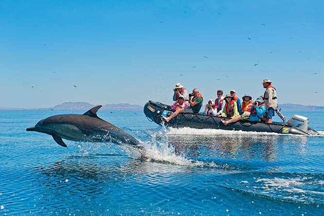 Dolphin jumping out of water in front of Lindblad zodiac