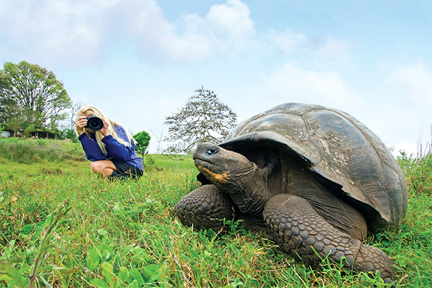 Lindblad Expeditions passenger photographing a wild Galapagos tortoise on Santa Cruz Island