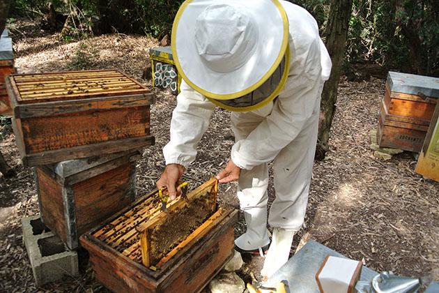 Beekeeper Jose Manuel Garcia-Fernandez giving a presentation