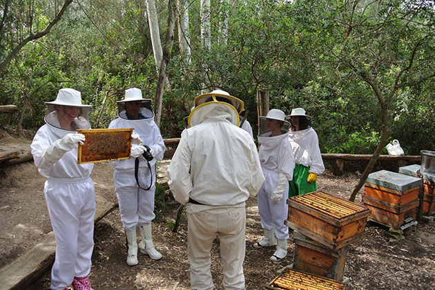 Tour group in beekeeper suits