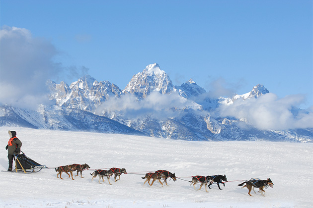 Wide-angle shot of dog sled with Alaskan mountain range in the background