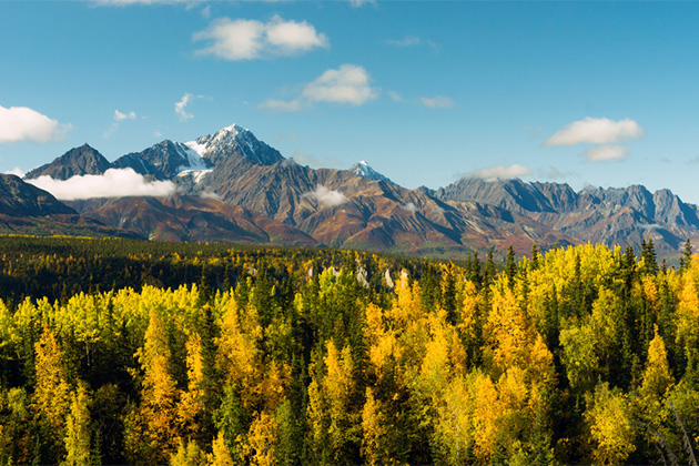 Fall colors in the Chugach National Forest in Alaska
