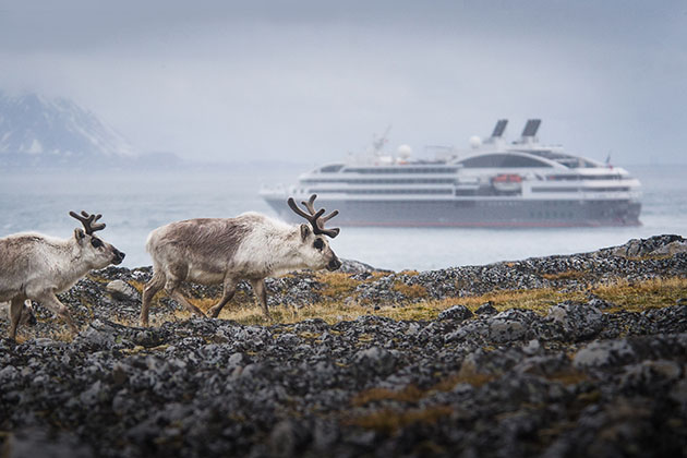Arctic wildlife sightings on a Ponant cruise