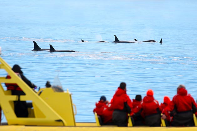 A group whale watching in Victoria, Canada