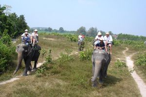 Elephant Village photo courtesy of Kitty031/TripAdvisor