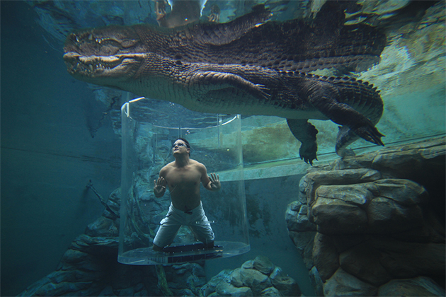 Crocosaurus Cove,