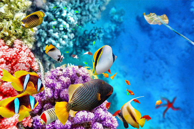 Colorful fish and corals