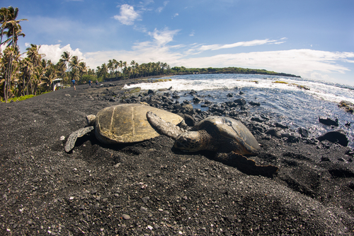 Punalu U Black Sand Beach Best Beaches Hawaii Cruise Critic