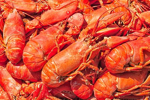Steamed lobsters