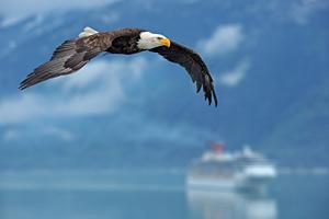 Alaska-Cruises-Carnival-Spirit-Eagle