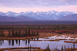 Alaska-Cruises-Denali-National-Park
