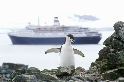 Cruise ship Marco Polo and Chinstrap penguin (Pygoscelis antarctica) at Half Moon Island, Bransfield Strait, Antarctica