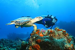 cozumel-diver-turtle