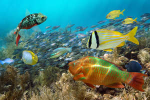 What is diving in antigua like