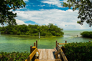 cruise-florida-keys-mangroves