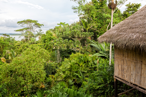 Yasuni Jungle Lodge in the Amazon, Ecuador