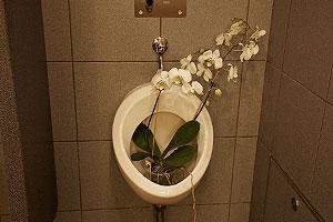 olivia-cruise-urinal