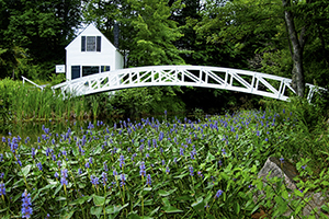 White house and bridge over green meadow with purple flowers