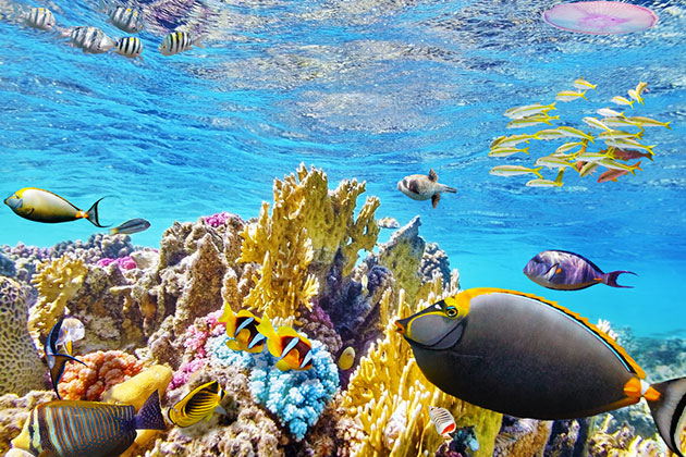 coral reef and colorful fish