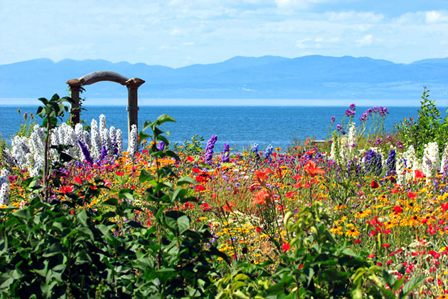 Colorful flowers on the St. Lawrence River