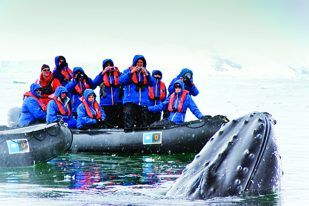 Whale-watching expedition