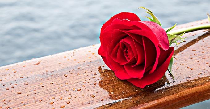 Romantic Red Rose. Passion rose flower on railing of cruise ship. Ocean in background
