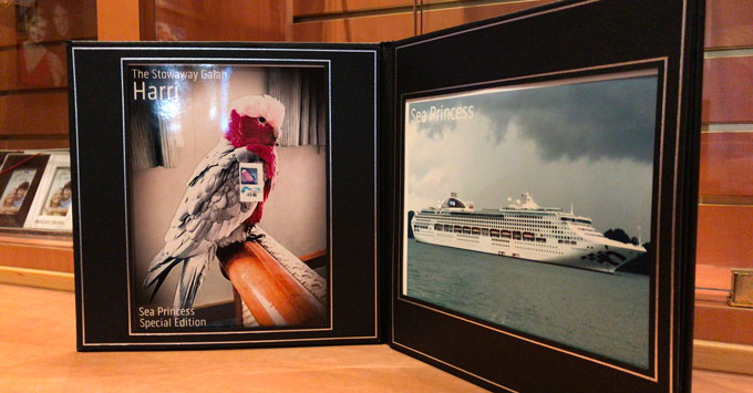 Harri The Stowaway Galah Fan Photos Now For Sale On Sea Princess - Where is the sea princess cruise ship now