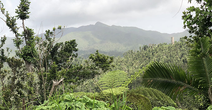 Currently, Angelito Trail is the only open trail in El Yunque National Forest