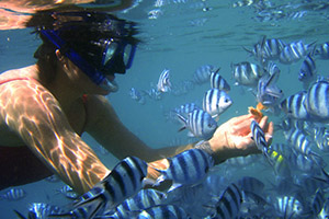 Fiji Princess - Snorkeling