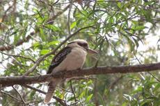 Adelaide Cleland Wildlife Park