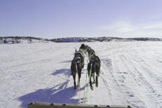 Anchorage Dog Sledding cruise excursion