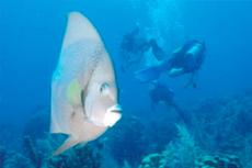 Aruba Scuba - Certified