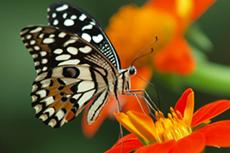 Aruba Butterfly Farm cruise excursion