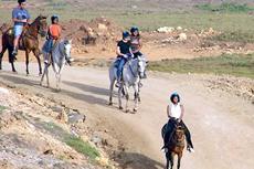 Aruba Horseback Riding cruise excursion